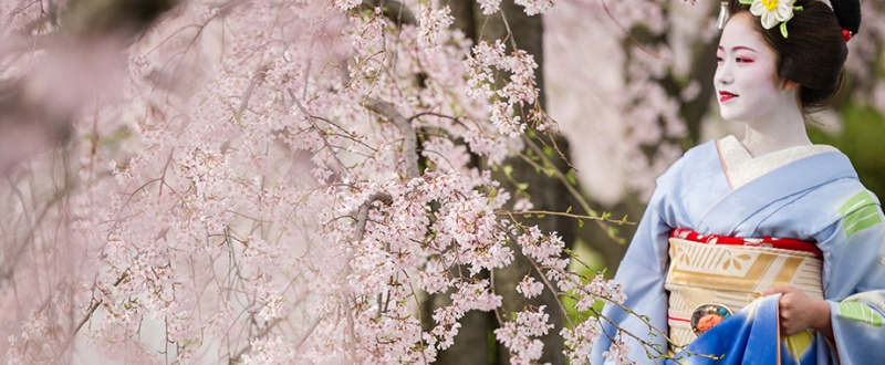 photo : http://www.japanphotoguide.com/event/2015-japan-cherry-blossom-photography-tour/