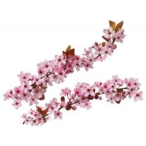 Stickers branche d'arbre en fleur