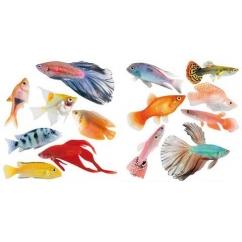 http://www.wallsweethome.fr/fr/stickers-deco/mini-stickers/mini-poissons-tropicaux/