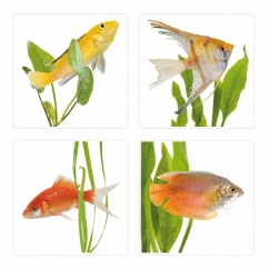 http://www.wallsweethome.fr/fr/stickers-deco/stickers-carrelage/carrelage-poissons/