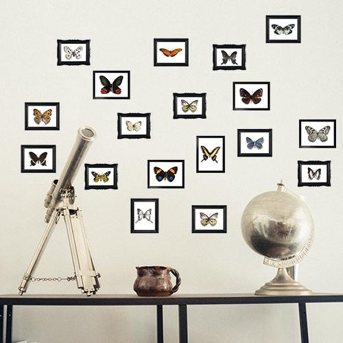 Comme un cabinet de curiosité la collection de papillons s'affiche à la façon des murs de cadres pour un accorchage à l'anglaise.
